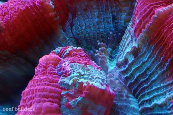 focus-stack-coral-brain