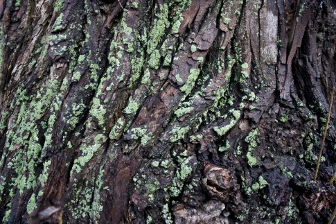 mossy_wood_bark_texture_01