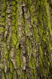 mossy_wood_bark_texture_07